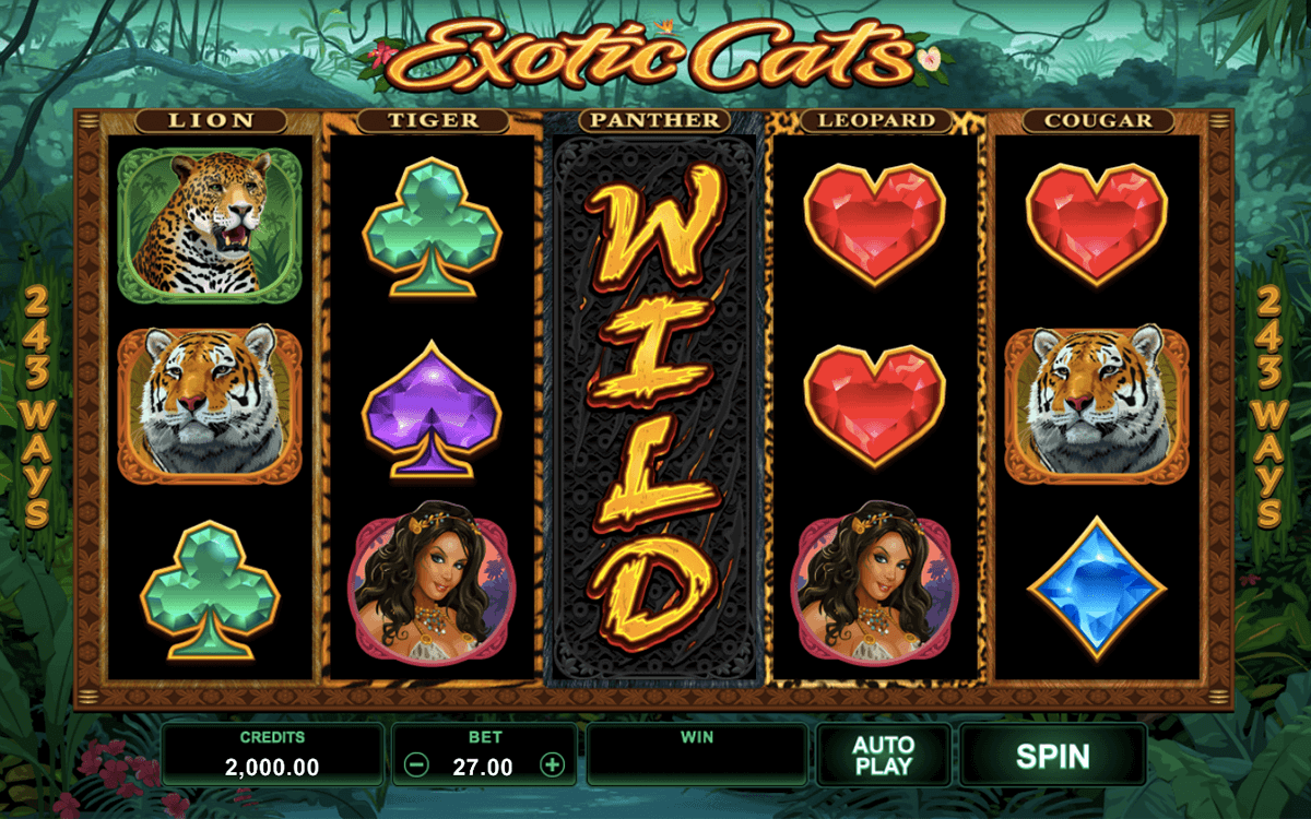 exotic cats microgaming pacanele